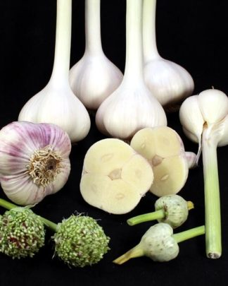 Ail Garlic - Music - Bulbes et Bulbilles - natureail.ca