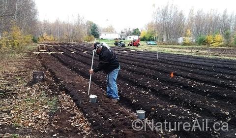 dernières-plantations-ail-saison