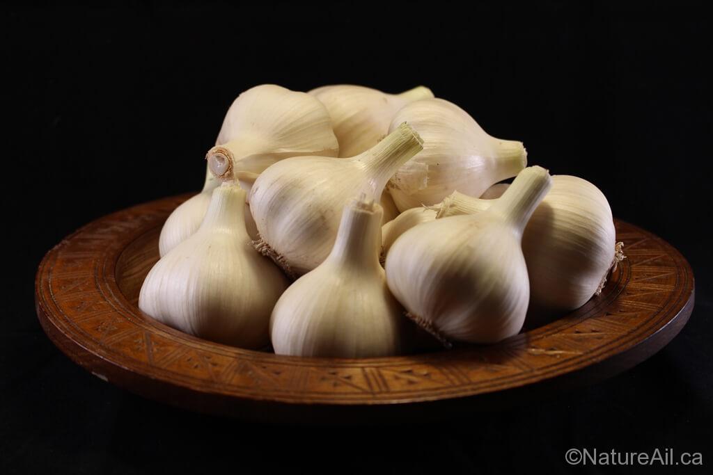Ail Garlic - Leningrad - Bulbes