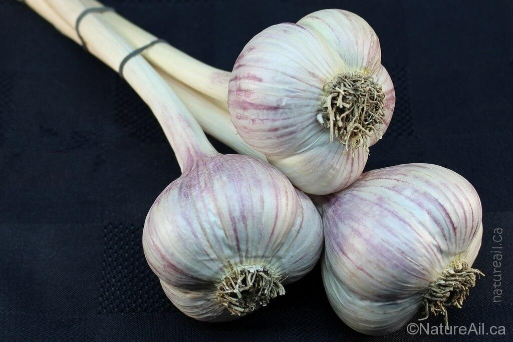Ail Garlic - Music - Bouquet trio