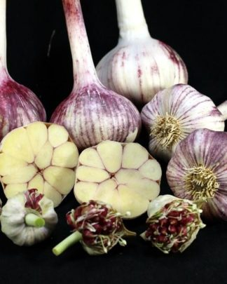 Ail Garlic - Plum Crazy - Bulbes Bulbilles Coupe - natureail.ca