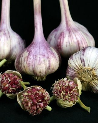 Ail Garlic - Deep Purple - Bulbes Bulbilles - natureail.ca