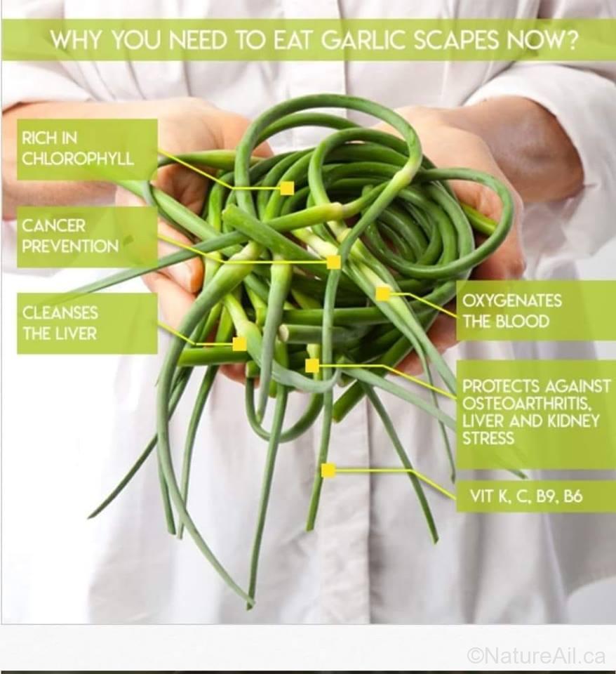 Propriétés Fleur d'Ail - Properties Garlic Scape