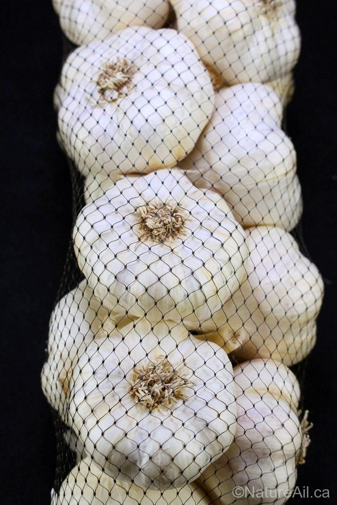 Ail du Québec Garlic - Bulbes d'Ail Italian en Sac Filet