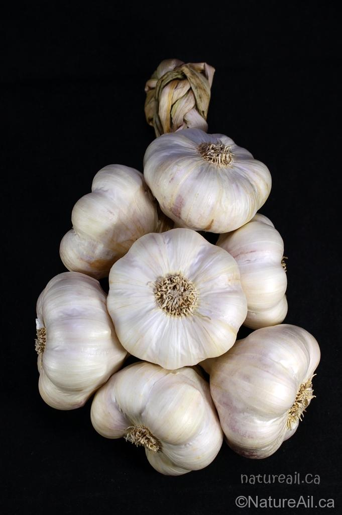 Ail du Québec Garlic - Tresse d'Ail Italian Garlic Braid 7 bulbes