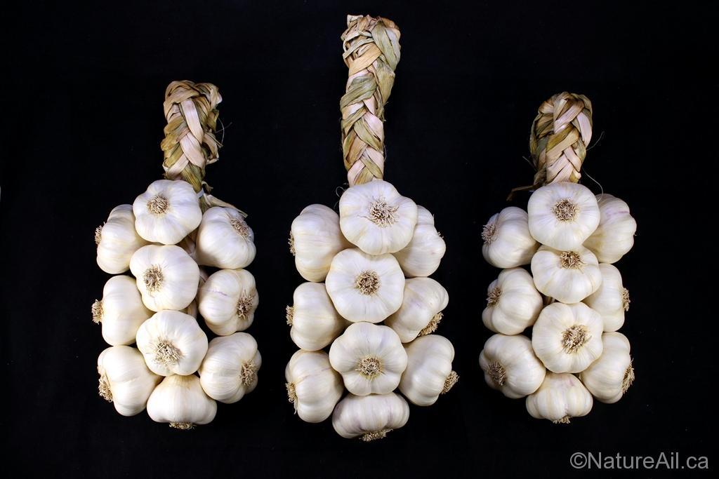Ail du Québec Garlic - Tresse d'Ail Italian Garlic Braid